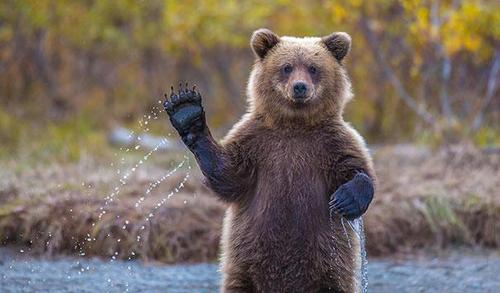 funny-bears-doing-human-things-1.jpg